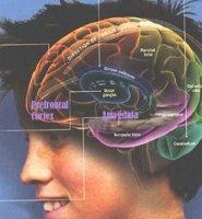 پنج حقيقت مرموز درباره مغز نوجوانان کشف شد
