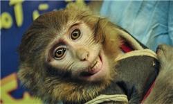 میمون فضا نوری